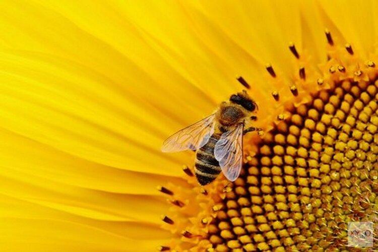 Zorg voor beschutte plekken voor bijen in de tuin
