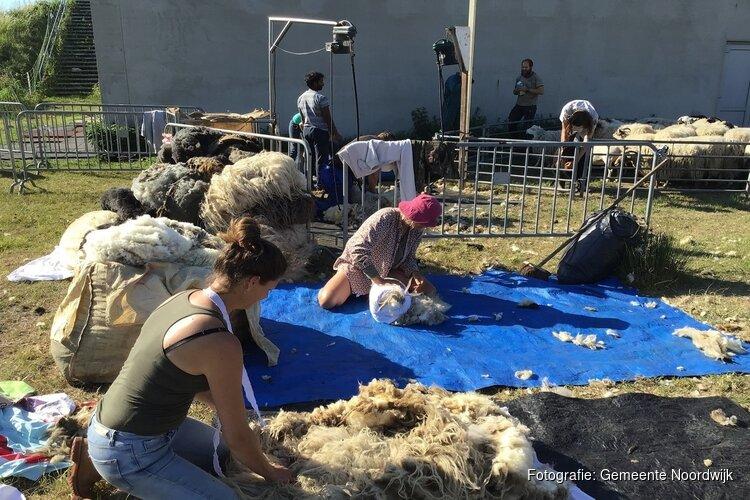 Vrolijke schapen eten afval tevoorschijn